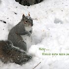 Snowy Squirrel Speaks by Geno Rugh
