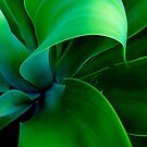 Agave Green by Laurette Ruys
