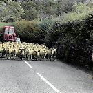Sheep Parade by Wayne King