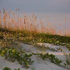 Sunset Dunes by Susan Gottberg