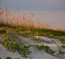 Sunset Dunes by Susan Gottberg