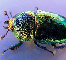 Christmas Beetle by Peta Hurley-Hill