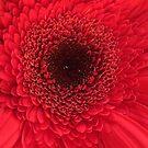 Red Flower Macro  by AuntDot