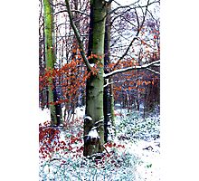 Winters Leaves Photographic Print