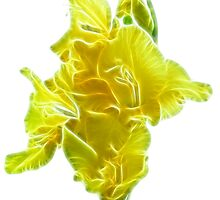 yellow gladiolus by Sergieiev