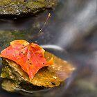 Autumn Leaf in Stream by Kenneth Keifer