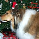 Collie Reindeer by Glenna Walker