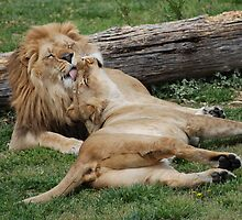 Lion Love by CCCreations