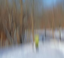 December Stroll by Bill Morgenstern