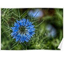 Blue Bush Flower Poster
