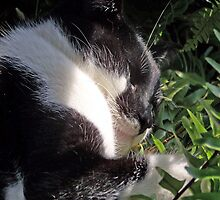 Dreaming Among The Ferns by Terri Chandler