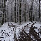 &quot;Two roads diverged in a silver wood,&quot; der Schwarzwald, Germany 2008 by J.D. Grubb