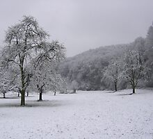 Quiet Field of Winter, der Schwarzwald, Germany 2008 by J.D. Grubb