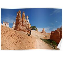The Lone Tree - Bryce Canyon National Park Poster