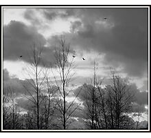 As the crow flies in black and white Photographic Print