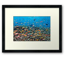 Rainbowed Sea Framed Print