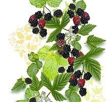 Blackberries from Old Nilsson's Farm by PrivateVices