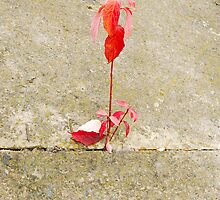 red leaf, a tender sprout is in a concrete by Sergieiev