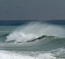 Seaguls flying over a wave by presbi