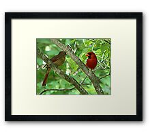 Northern Cardinal Pair - female and male Framed Print