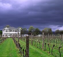 Moody Vineyard by John Violet