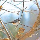 At the bird feeder by Carolyn Clark