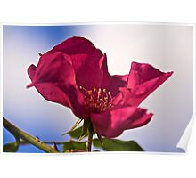 Red Rose and Sky Poster