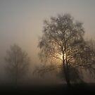 Misty morning by Trine