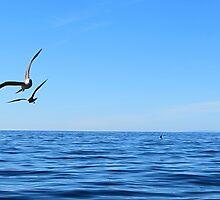 Seagulls In Flight by litosing