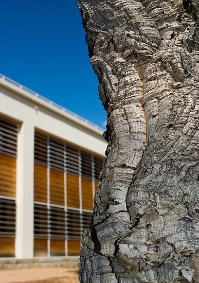 Cork tree by MadHorse
