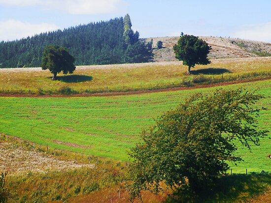 Paisaje Rural Sur De Chile By Cieloverde Redbubble
