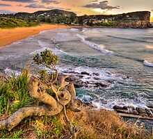 Solitary - Avalon Beach - The HDR Experience by Philip Johnson