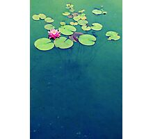 Lily Pond Blues Photographic Print