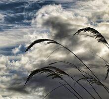 Pampas by Bern McAllister