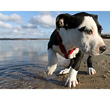 Louie at the bay Photographic Print