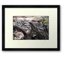 Ricord's Iguana Framed Print