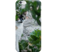 332015 calico wild thing iPhone Case/Skin