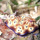 Nudibranch by TaiHaku