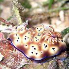 Nudibranch by TaiHaku