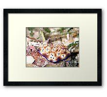 Nudibranch Framed Print