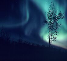 Curtains of Light - The Aurora Borealis  by Harry Snowden