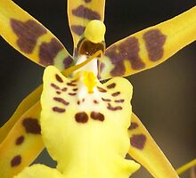 Yellow Spotted Orchid by ChereeCheree