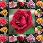 Dreamy Roses Collage by kathrynsgallery