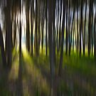 Trees abstract by Sheila  Smart