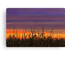 Sky Maize Canvas Print