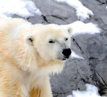 Polar Bear by Aneurysm