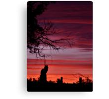 Cat amongst the sunset Canvas Print
