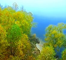 Autumn landscape, trees in a fog by Sergieiev