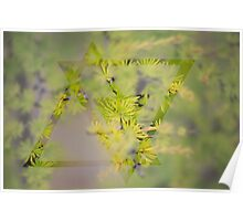Larch Poster