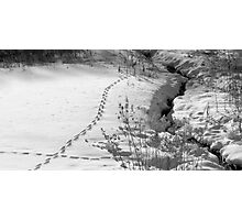 Tracks on the Morning After Photographic Print